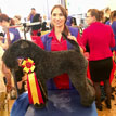 OSTER TOURNAMENT of CHAMPIONS / Stadtroda, Niemcy: finałowa szóstka (Kerry Blue Terrier)